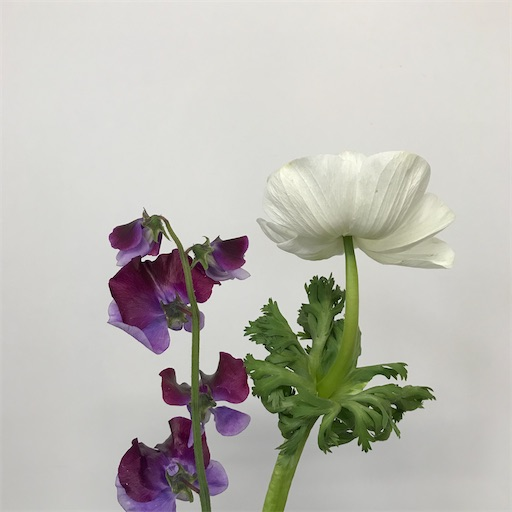 f:id:asunaro-flower:20200128142600j:image