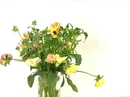 f:id:asunaro-flower:20200128170750j:image