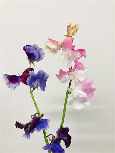 f:id:asunaro-flower:20200208014625j:image