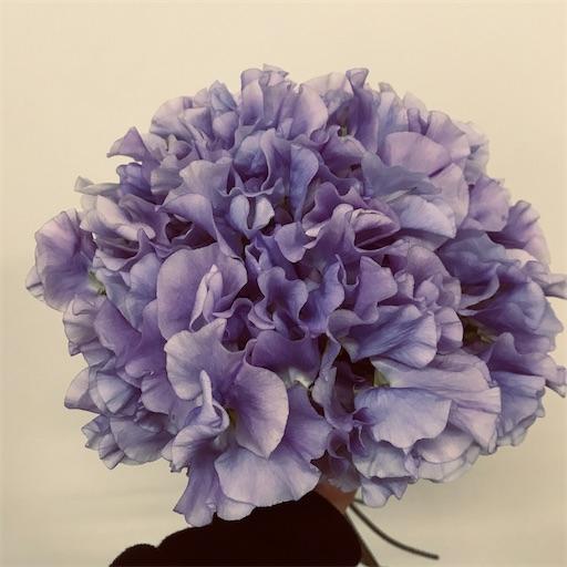 f:id:asunaro-flower:20200208014930j:image