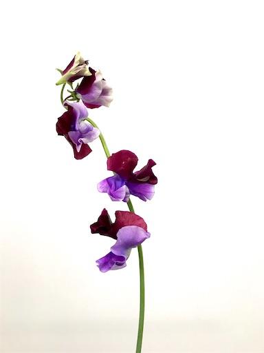 f:id:asunaro-flower:20200208015012j:image