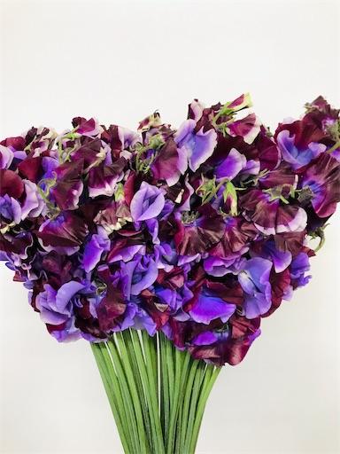 f:id:asunaro-flower:20200208015114j:image