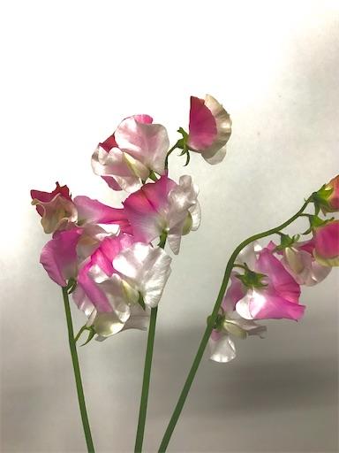 f:id:asunaro-flower:20200208015616j:image