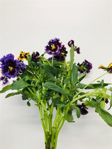 f:id:asunaro-flower:20200220160907j:image