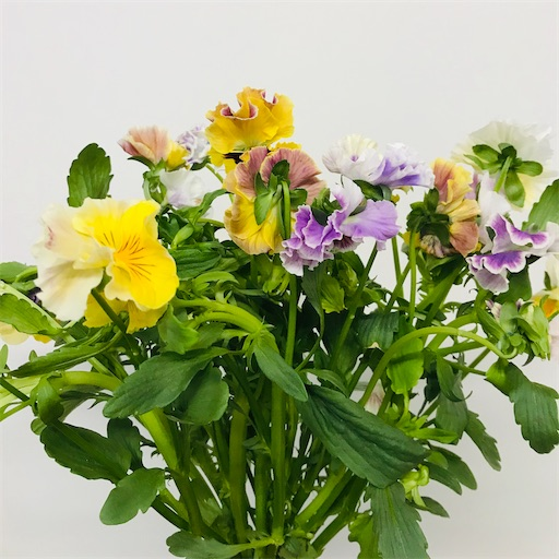 f:id:asunaro-flower:20200220233854j:image