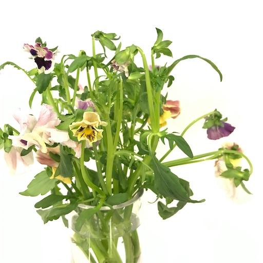 f:id:asunaro-flower:20200220234209j:image