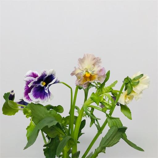 f:id:asunaro-flower:20200220234313j:image