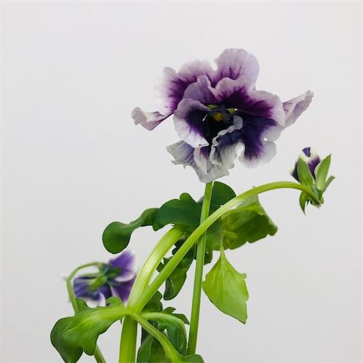 f:id:asunaro-flower:20200220234317j:image