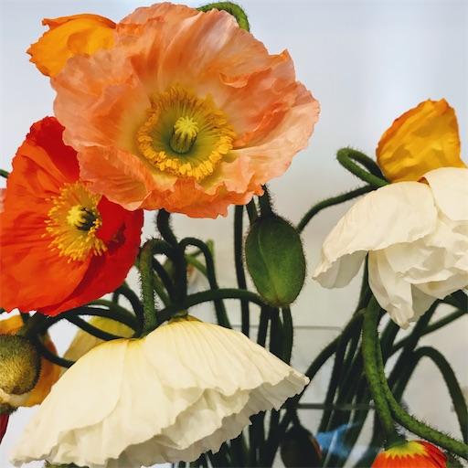 f:id:asunaro-flower:20200221003452j:image