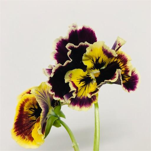 f:id:asunaro-flower:20200226001031j:image