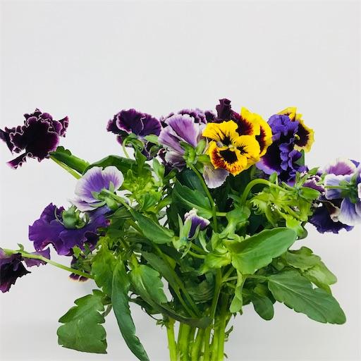 f:id:asunaro-flower:20200226001923j:image