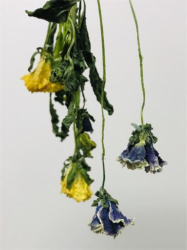 f:id:asunaro-flower:20200226002629j:image