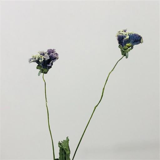 f:id:asunaro-flower:20200226002750j:image