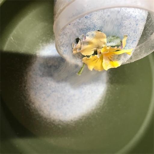 f:id:asunaro-flower:20200226003000j:image