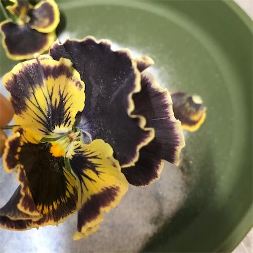 f:id:asunaro-flower:20200226003013j:image