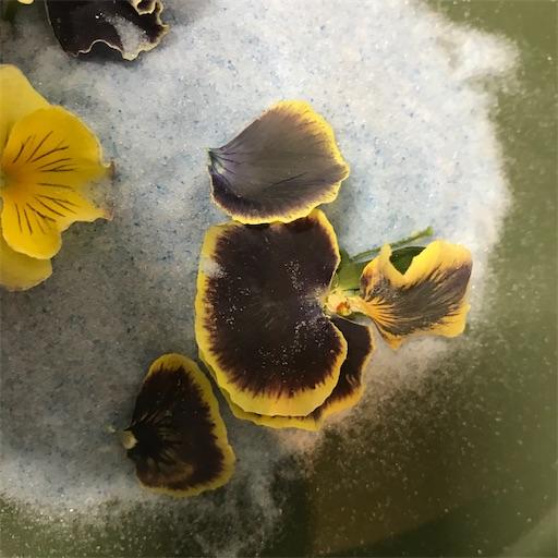 f:id:asunaro-flower:20200226003556j:image