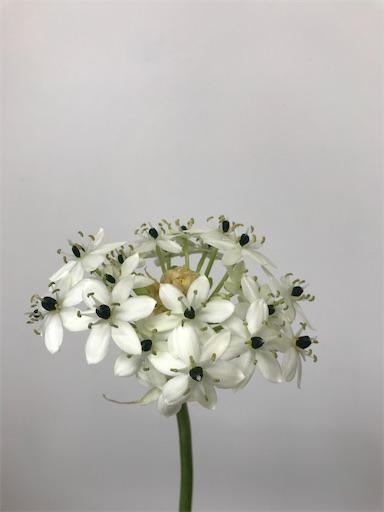 f:id:asunaro-flower:20200304185725j:image