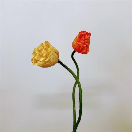 f:id:asunaro-flower:20200304234447j:image