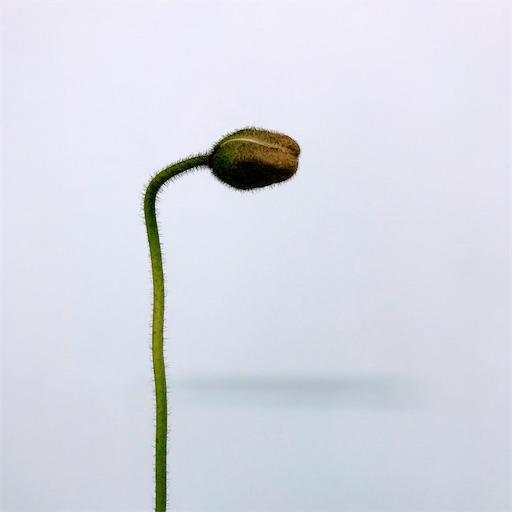 f:id:asunaro-flower:20200304234453j:image
