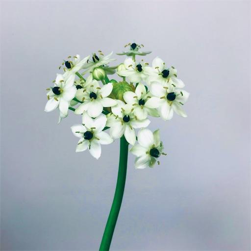f:id:asunaro-flower:20200305000655j:image