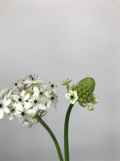 f:id:asunaro-flower:20200305001938j:image
