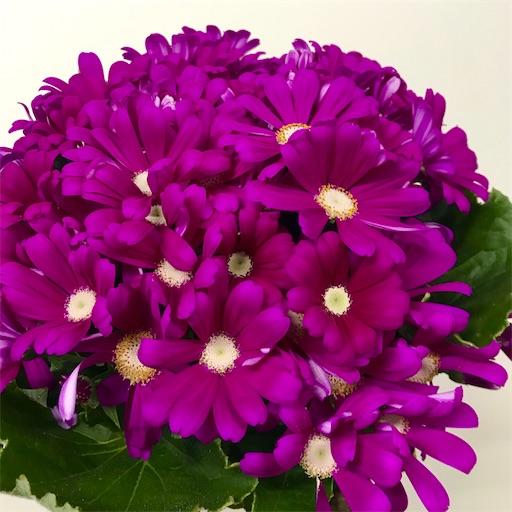 f:id:asunaro-flower:20200312012407j:image