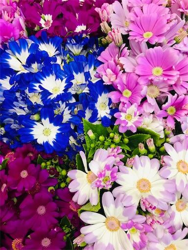 f:id:asunaro-flower:20200312013333j:image