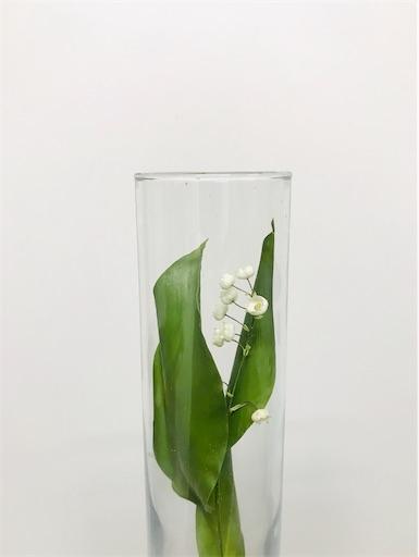 f:id:asunaro-flower:20200323132613j:image