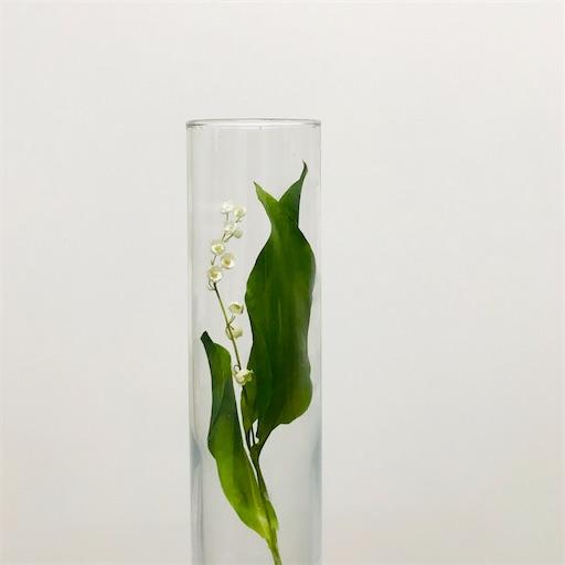f:id:asunaro-flower:20200323132620j:image