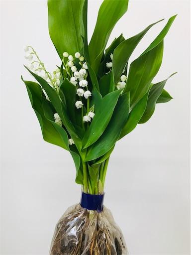 f:id:asunaro-flower:20200323132841j:image