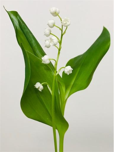f:id:asunaro-flower:20200323145532j:image