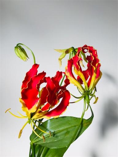 f:id:asunaro-flower:20200330202201j:image