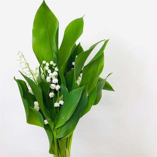 f:id:asunaro-flower:20200402142200j:image