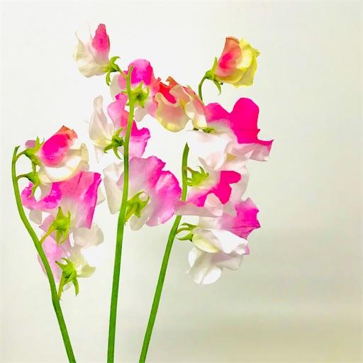 f:id:asunaro-flower:20200402142702j:image