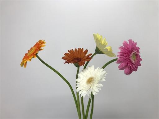f:id:asunaro-flower:20200402143812j:image