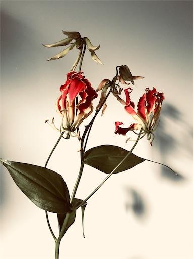 f:id:asunaro-flower:20200418013436j:image