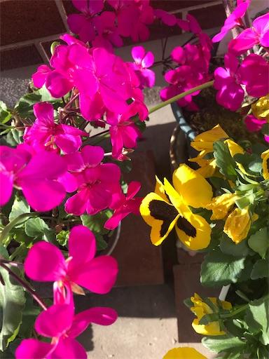 f:id:asunaro-flower:20200501153124j:plain