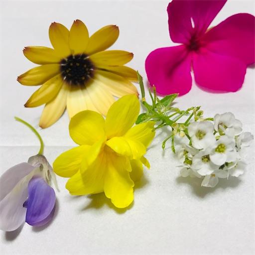 f:id:asunaro-flower:20200501155856j:image
