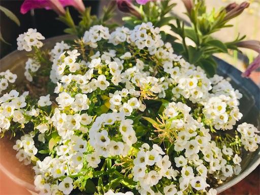 f:id:asunaro-flower:20200501161027j:plain