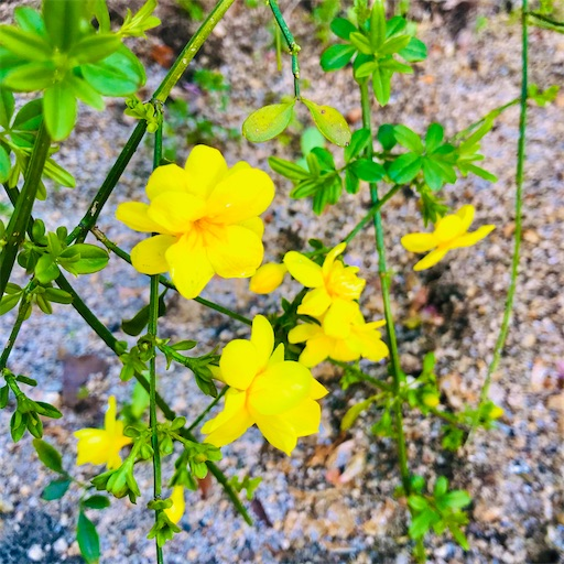 f:id:asunaro-flower:20200501175545j:plain