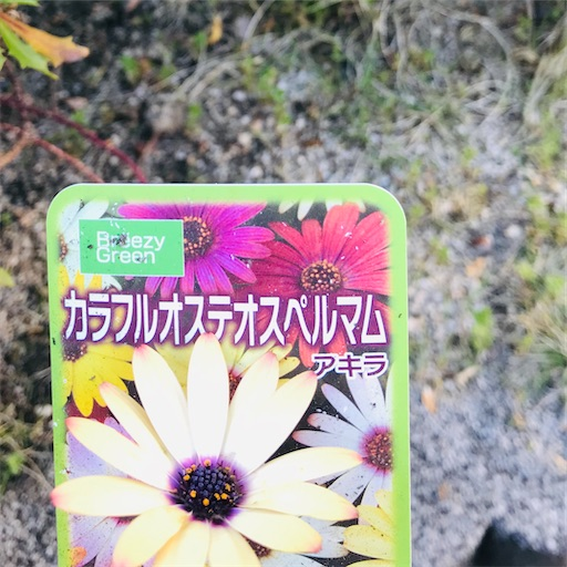 f:id:asunaro-flower:20200501181201j:image