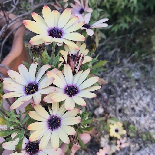f:id:asunaro-flower:20200501181205j:plain