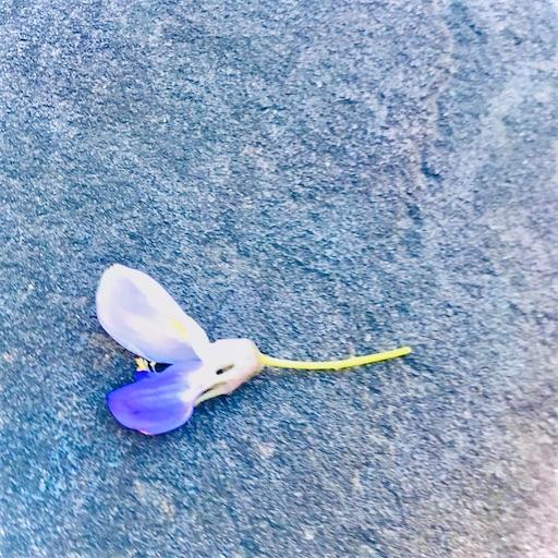 f:id:asunaro-flower:20200501181823j:image