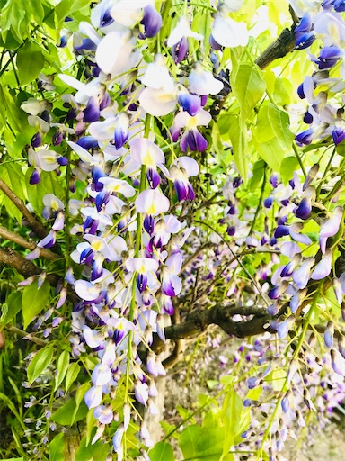 f:id:asunaro-flower:20200501181827j:plain