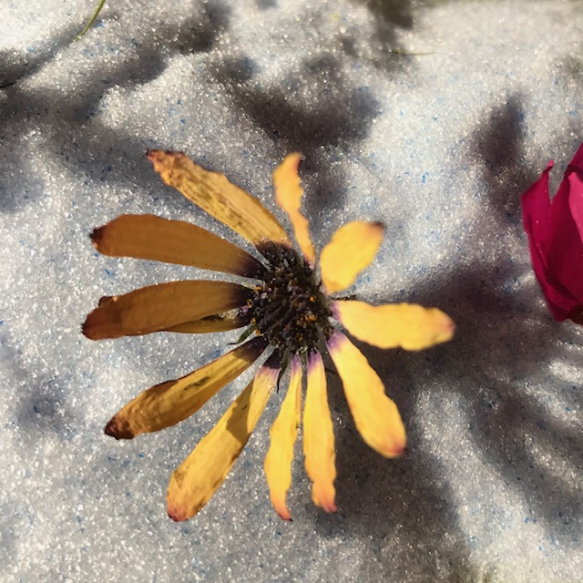 f:id:asunaro-flower:20200506233227j:plain