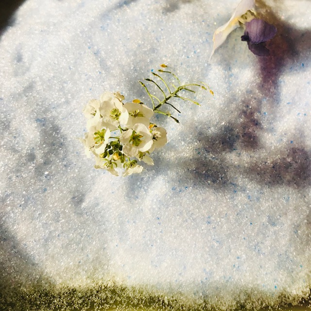 f:id:asunaro-flower:20200506233301j:plain