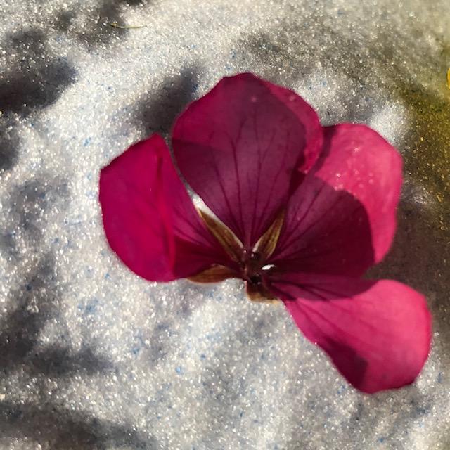 f:id:asunaro-flower:20200506233323j:plain