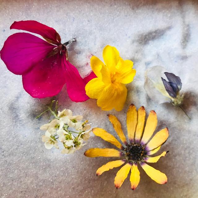f:id:asunaro-flower:20200506233343j:plain