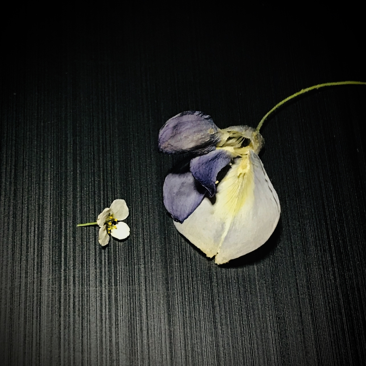 f:id:asunaro-flower:20200506235912j:plain