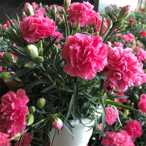 f:id:asunaro-flower:20200509080734j:image